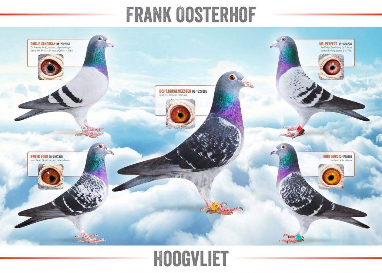 Frank Oosterhof